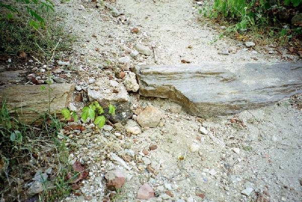 Example of petrified wood